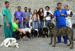 sessao-especial-dia-dos-animais-2013
